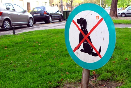 do-not-feed-the-dog